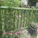 恒森仿木護欄2——7款竹綠色