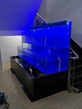 廈門鎮海路定做海鮮池/思明海鮮玻璃魚池定做/思明酒店海鮮池圖片