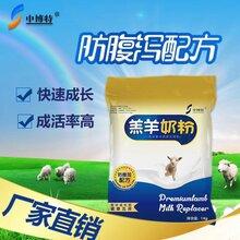 中博特羔羊奶粉带你了解羔羊的管理