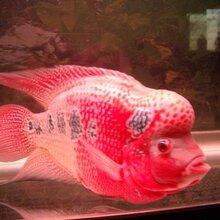 深圳专业上门清洗鱼缸护理鱼缸鱼病防治观赏鱼出售图片