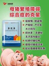 母猪产后不吃食小猪拉稀腹泻图片