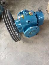 山东大流量罗茨油泵LC皮带罗茨泵罗茨转子泵图片