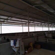 猪场用透光卷帘帆布防风防雨帆布抗老化防寒帆布-图片