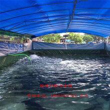 帆布游泳池,帆布游泳池生产厂,帆布水池图片