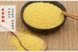黄小米的功效与作用有机黄小米散装小米OEM定制