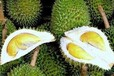 我将带头冲锋,青岛港进口马来西亚芒果热带水果进口代理公司