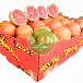 新鲜进口水果南非金豹西柚葡萄柚供应奶茶餐饮店水果汁专用