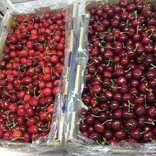 智利车厘子双JJ进口大樱桃新鲜水果10斤非美国车厘子甜橙大樱桃图片