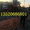 河北沧州东光县电磁线回收价格欢迎来电