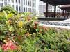 金沙洲環境好好的養老院排名價格