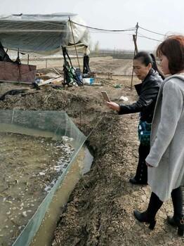 江苏聚农10号生态养殖投资少收益高