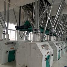 驻马店小麦加工面粉机械成套设备图片