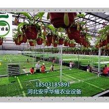 供应农户种植业现代农业设施温室大棚温室苗床
