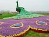 2018北京花展花卉集合地