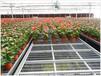 福建温室养花苗床移动式/潮汐式多种规格