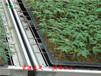 种植温室安装苗床为什么要使用移动式苗床?