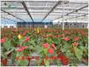 盆花花卉苗床网管理方法