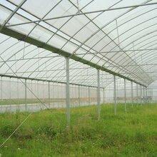 塑料大棚-溫室設施-農業專用設備-保溫性好造價低圖片