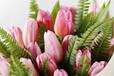 温室郁金香种植-带你畅游浪漫花海-咱们偶遇吧