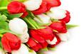 温室花卉种植-郁金香栽培技术-田间管理-人工调控