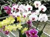 移動苗床-花卉種植-規格全價格合理-河北安平