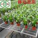 普陀養花育苗常用溫室苗床網規格參數