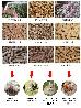 木屑颗粒机