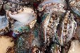 厄瓜多尔南美白虾清关青岛港口进口的流程