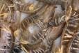 厄瓜多尔冻虾进口清关青岛冷冻海鲜进口专业报关行