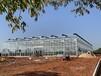 江蘇蘭花種植玻璃溫室大棚16外墻、4米開間7000平米建設公司