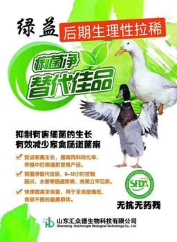 鸭肠炎水泄怎么办?