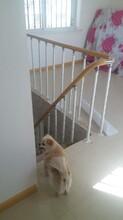 上海实木楼梯波形护栏立柱价格图片