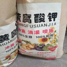 黃腐酸鉀.農業黃腐酸鉀水溶肥.黃腐酸鉀糖蜜粉