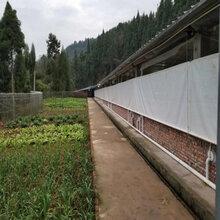 户外冬季农场养殖保温卷帘布抗寒保暖养殖帆布卷帘定做图片