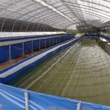 折疊魚池帆布水池防滲漏帆布蓄水池錦鯉魚池加厚刀刮布大型養殖池圖片