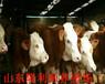 全國肉牛價格行情