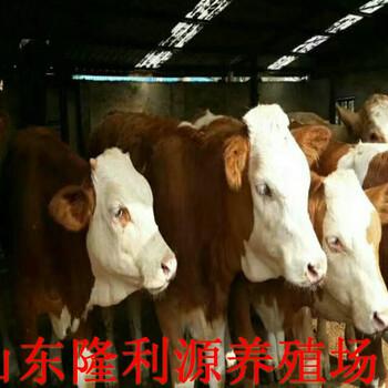 湖南怀化肉牛交易市场批发价格