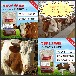 牛吃什么长得快育肥牛饲料