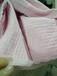 庫存針織面料卷布針織夾絲綿批發直銷