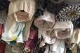 針織卷布面料庫存直銷舒適批發萊卡