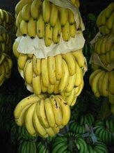 靚香蕉批發,只做高質量高檔產品,歡迎上門看貨訂購圖片