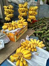 蘋果蕉,粉蕉,香蕉批發圖片