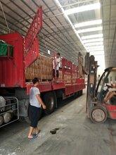上海到徐州十三平板车出租图片