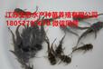 贛州興國縣中華鱉苗多少錢一斤