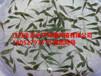 荊州松滋雜交泥鰍苗魚苗價格
