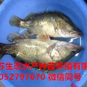 宁德福安黄鳝苗多少钱一尾