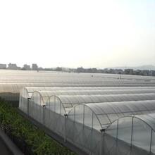 温室大棚南京栖霞区温室大棚哪里可以买到图片