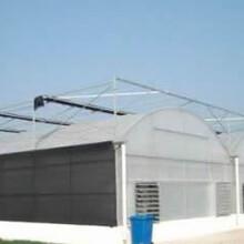 养鸭大棚南京雨花台区养鸭大棚哪里可以买到图片