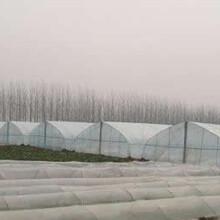 日光大棚南京雨花台区日光大棚厂家哪里有图片