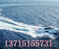 大梅沙帆船租赁价格_大梅沙帆船租赁_大梅沙帆船租赁多少钱公司国家A级企业